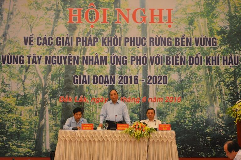Xây dựng, đề xuất giải pháp, cơ chế đặc thù về bảo vệ, phát triển, khôi phục rừng Tây Nguyên.