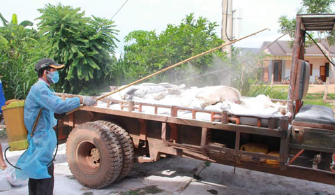 Bộ NN-PTNT cấp 6.000 lít hóa chất cho tỉnh Đắk Lắk chống dịch trên động vật