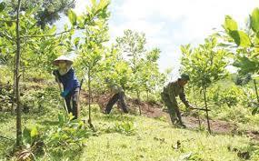 Đẩy nhanh tiến độ trồng rừng thay thế diện tích rừng chuyển sang mục đích khác