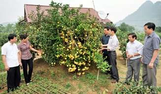 Tổ chức Đoàn đi học tập kinh nghiệm xây dựng Nông thôn mới của UBND huyện M'Đrắk tại một số tỉnh