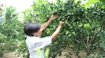 Đề nghị miễm giảm đóng tiền trồng rừng thay thế, để trồng cây ăn quả