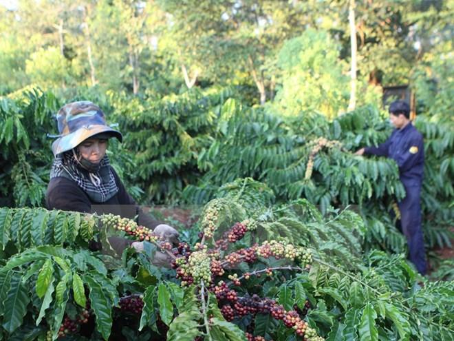 Đắk  Lắk sẵn sàng cho tổng điều tra nông thôn, nông nghiệp và thủy sản năm 2016.