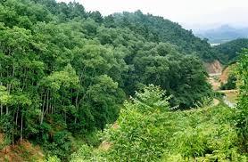 Chương trình bảo vệ và phát triển rừng bền vững