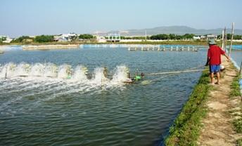 Phê duyệt Kế hoạch đấu thầu Quy hoạch phát triển ngành thủy sản tỉnh Đắk Lắk