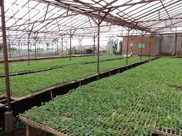 Phê duyệt quyết toán công trình Xây dựng vườn ươm giống cây nông lâm nghiệp và vườn nhân chồi ghép cây ăn quả, cây công nghiệp, hạng mục: Nhà vườn ươm