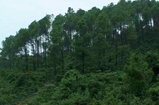 Công ty Hoàng Gia xin khảo sát trồng rừng và trồng cây nông nghiệp