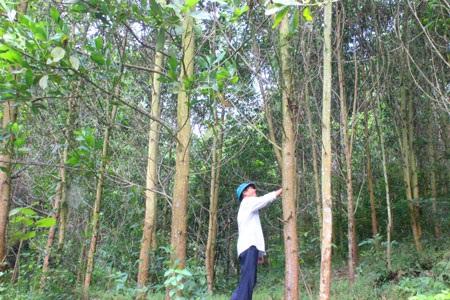Giao kế hoạch vốn để trồng bổ sung cây bản địa trong rừng trồng đặc dụng