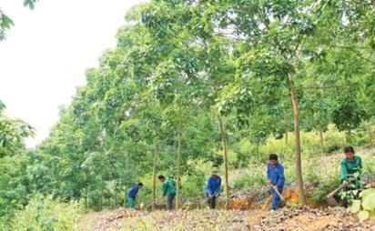 Đề nghị phê duyệt suất đầu tư nông nghiệp của vườn cây cao su