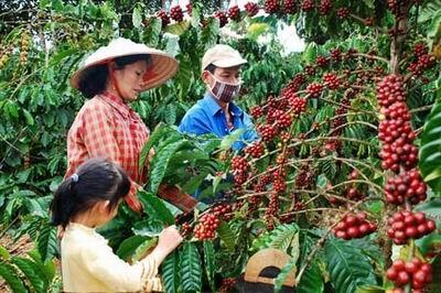 Tuyên truyền Chương trình cho vay tái canh cà phê