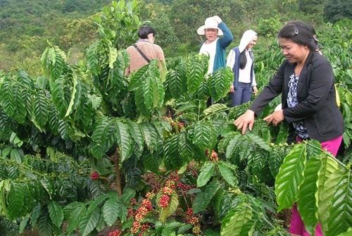 Điều chỉnh thời điểm quyết định giải thể đối với Công ty TNHH một thành viên Cà phê Buôn Ma Thuột