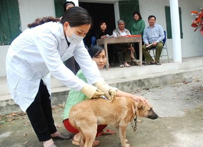 Về việc tiếp tục tăng cường các hoạt động phòng, chống bệnh Dại động vật.