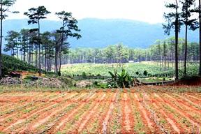 Hỗ trợ kinh phí tự tạo quỹ đất