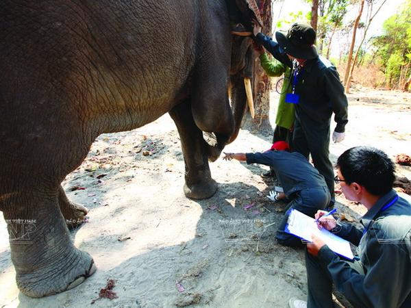 Phê duyệt Thiết kế cơ sở dự án khẩn cấp bảo tồn voi tỉnh Đắk Lắk đến năm 2020, hạng mục: Nhà làm việc trung tâm, nhà ở cán bộ, viên chức, lao động trung tâm và hạ tầng kỹ thuật