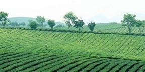 Xây dựng Đề án tăng cường quản lý đất có nguồn gốc từ các Nông, Lâm trường trên địa bàn tỉnh.