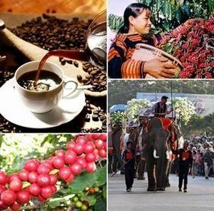 Cử đại diện của UBND tỉnh tham gia Ban Chỉ đạo ngày cà phê Việt Nam.