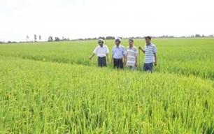 Xây dựng Đề án tăng cường và nâng cao chất lượng hoạt động của Hợp tác xã nông nghiệp gắn với liên kết sản xuất, tiêu thụ nông sản, xây dựng cánh đồng lớn tỉnh Đắk Lắk đến năm 2020 và định hướng đến năm 2030