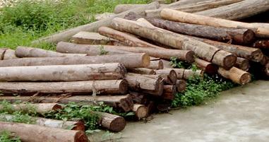 Phê duyệt phương án xử lý, giá khởi điểm đối với tài sản là gỗ
