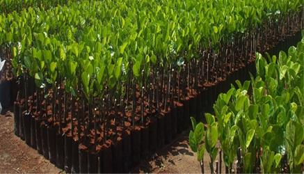 Phê duyệt kế hoạch lựa chọn nhà thầu bổ sung Dự án Chuyển đổi nông nghiệp bền vững tại Việt Nam (VnSAT) tỉnh Đắk Lắk