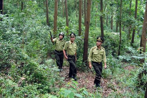 Triển khai Chỉ thị số 13-CT/TU ngày 10/10/2016 của Ban Thường vụ Tỉnh ủy về tăng cường các giải pháp bảo vệ, khôi phục và phát triển rừng bền vững