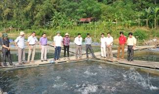 Công tác quản lý, nuôi thả cá tại các hồ chứa do Công ty TNHH MTV QL công trình Thủy lợi Đắk Lắk quản lý.