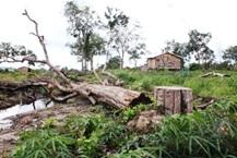 Thanh tra việc quản lý, sử dụng đất đai tại các Công ty TNHH Nông, Lâm nghiệp trên địa bàn tỉnh