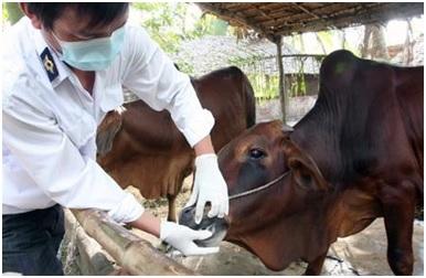 Công bố dịch Lở mồm long móng gia súc trên địa bàn tỉnh