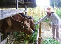 """Thực hiện đề tài """"Nghiên cứu đánh giá thực trạng giống và ứng dụng công nghệ WEBGIS quản lý giống bò tại tỉnh Đắk Lắk"""""""