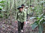 Thành lập Đoàn thanh tra liên ngành về xử lý vi phạm hành chính trong lĩnh vực chi trả dịch vụ môi trường rừng trên địa bàn tỉnh Đắk Lắk