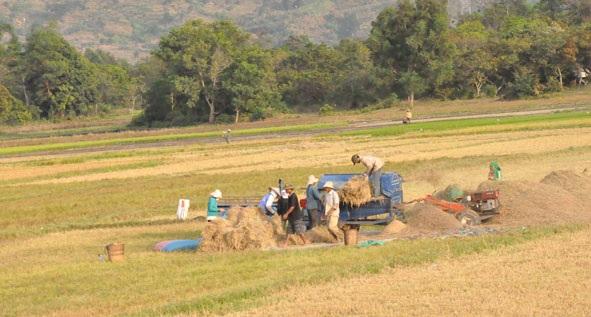 Cho thuê đất thực hiện Dự án sản xuất lúa giống
