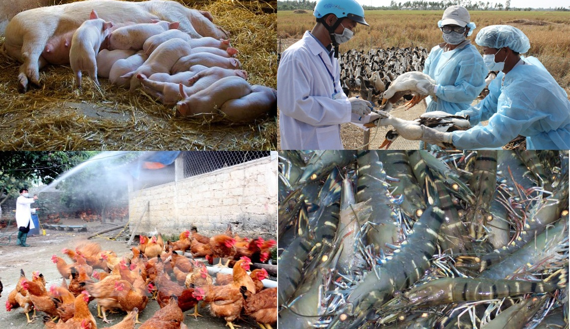 Ban hành Quyết định phê duyệt Kế hoạch phòng, chống dịch bệnh gia súc, gia cầm trên địa bàn tỉnh năm 2017
