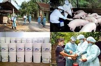 Thành lập Ban Chỉ đạo phòng, chống dịch bệnh động vật của tỉnh