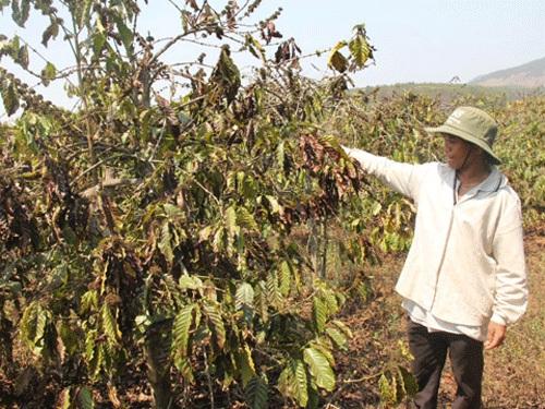 Chủ trương hỗ trợ khôi phục sản xuất do hậu quả hạn hán gây ra trong vụ Đông Xuân năm 2015- 2016 bằng phân bón