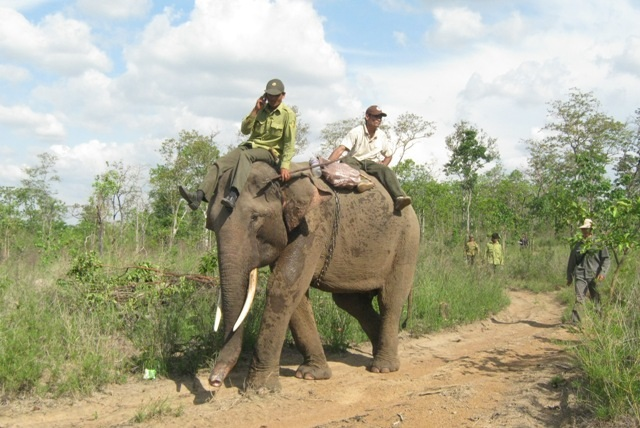 Chuyển đổi rừng tự nhiên để xây dựng công trình thuộc Dự án khẩn cấp bảo tồn Voi