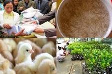 Chỉ định thầu đơn vị cung cấp giống để hỗ trợ khôi phục sản xuất do hạn hán gây ra năm 2016