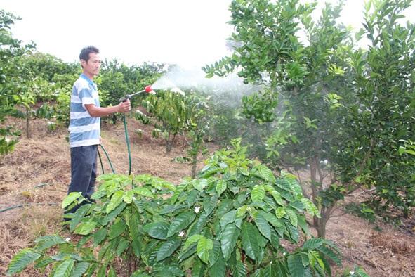 Chủ trương hỗ trợ cây trồng khi Nhà nước thu hồi đất đối với cây trồng tại huyện Buôn Đôn.