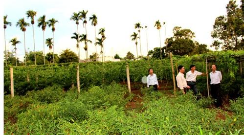 Thống nhất chủ trương giao đất làm nhà ở không qua đấu giá quyền sử dụng đất ở huyện Krông Năng.