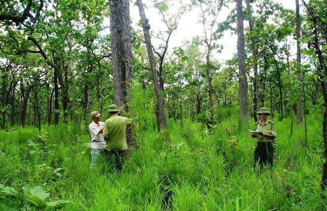 Lựa chọn cây trồng rừng sản xuất năm 2017