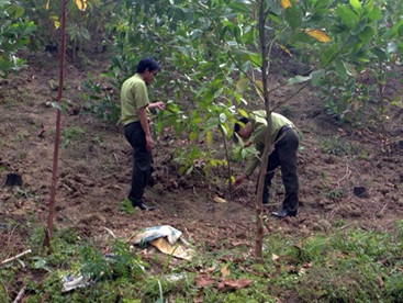 Quyết định thanh tra việc quản lý sử dụng đất tại các Công ty TNHH Lâm nghiệp Ea H'Leo, Ea Wy, Thuần Mẫn.