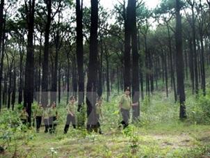 Quyết định thanh tra việc quản lý sử dụng đất tại các Công ty TNHH Lâm nghiệp Buôn Wing, Buôn Za Wầm.