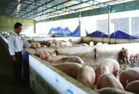 Phê duyệt quy hoạch tổng mặt bằng tỷ lệ 1/500 dự án Trang trại chăn nuôi heo giống, thịt tại xã Ea Wer, huyện Buôn Đôn.
