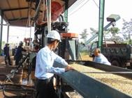 Ban hành Kế hoạch thực hiện Nghị quyết số 02/2016/NQ-HĐND của HĐND tỉnh về phát triển kinh tế tập thể tỉnh Đắk Lắk giai đoạn 2016-2020