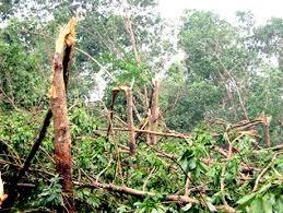 Thành lập Đoàn kiểm tra hiện trường xác định thiệt hại rừng trồng do các yếu tố bất khả kháng