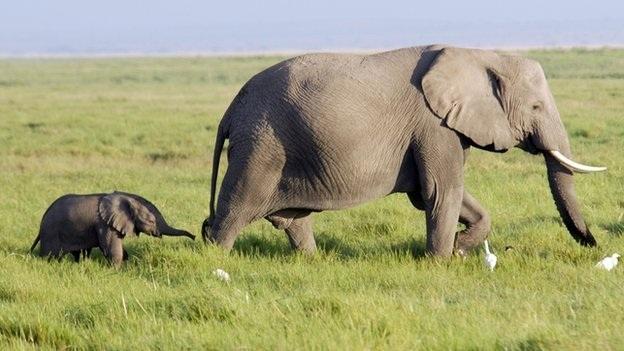 Lập quy hoạch, bảo tồn sinh cảnh sống cho voi hoang dã