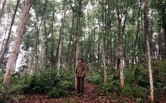 Xử lý các nội dung liên quan đến 18,8 ha rừng phòng hộ tại xã Hòa Thắng, thành phố Buôn Ma Thuột