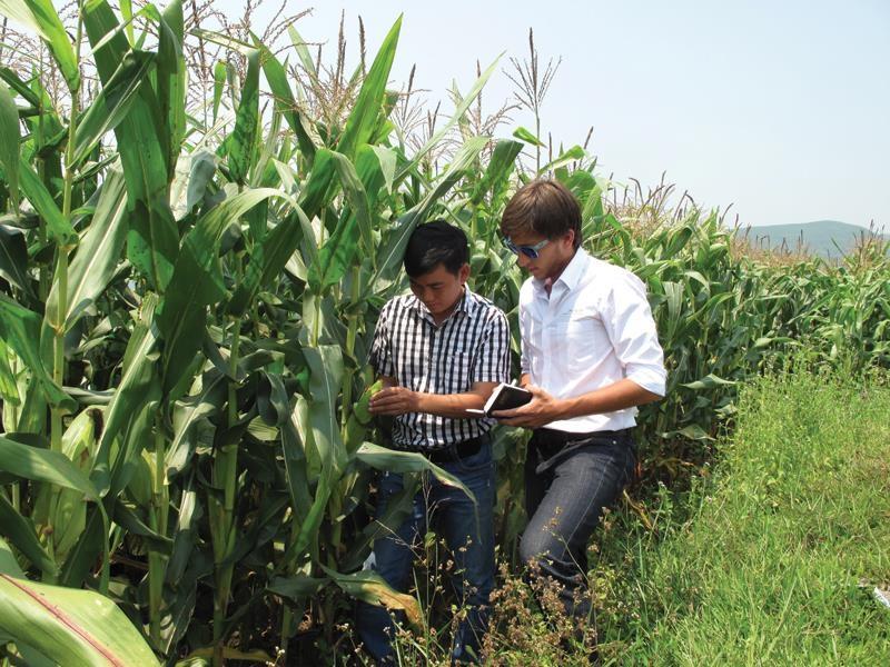 Triển khai các bước tiếp theo của dự án trồng Ngô công nghệ cao của công ty TNHH Song Phú