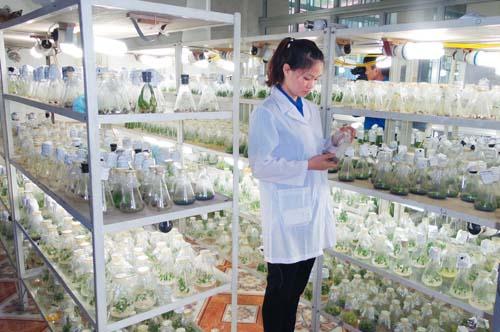 Đẩy mạnh và phát triển ứng dụng công nghệ sinh học phục vụ sự nghiệp công nghiệp hóa, hiện đại hóa đất nước