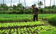 Đề nghị bổ sung giá đất ở, giá đất nông nghiệp tại một số vị trí, đoạn đường chưa được quy định tại Nghị quyết số 136/2014/NQ-HĐND