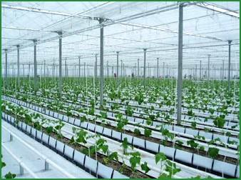 Quy hoạch khu, vùng nông nghiệp ứng dụng công nghệ cao