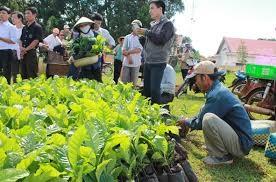 Chủ trương bồi thường, hỗ trợ cây trồng khi Nhà nước thu hồi đất để thực hiện công trình Cụm đầu mối Hồ chứa nước Krông Pắk Thượng