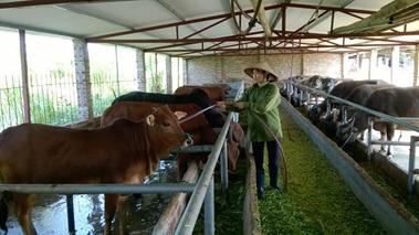 Tăng cường công tác phòng, chống đói, rét cho đàn gia súc tại địa phương